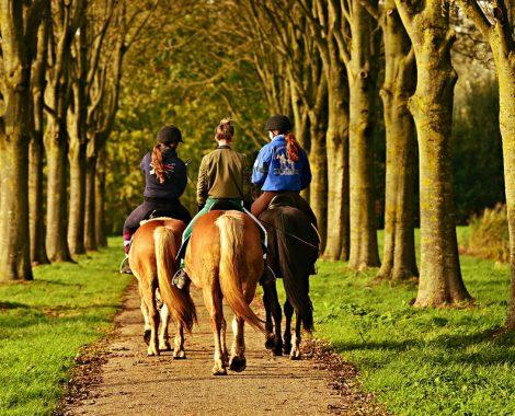 Gîtes équestres - Châteaux de la Loire Blois Chambord Cheverny Beauval